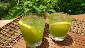 〔お中元〕レモン茶んが作れる 粉末緑茶<br>2,592円